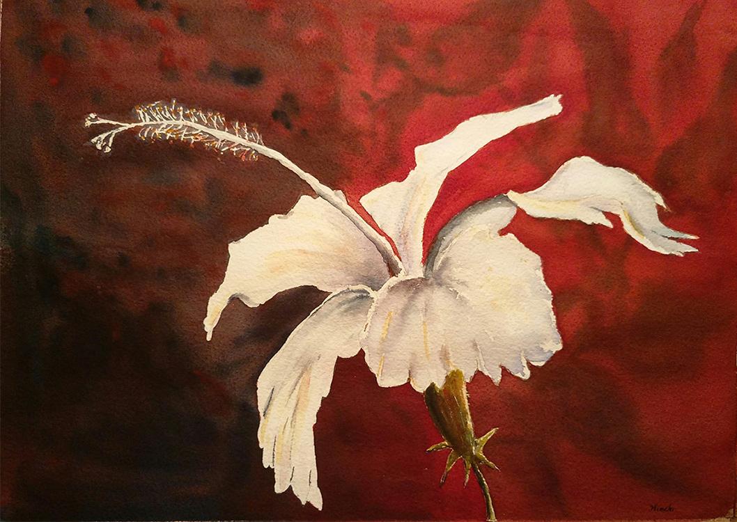 White Hibiscus #3